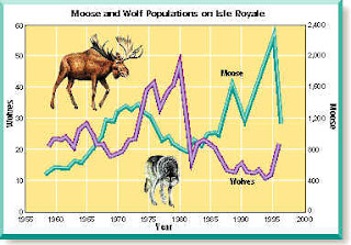 moose and wolf predator prey relationship in the tundra